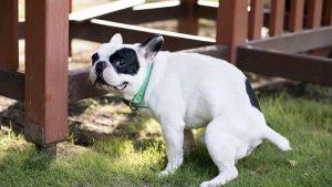 Tel Avivde Dışkı Toplamayan Sahipleri Belirlemek İçin Köpek DNA'sı Kullanılacak