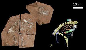 200 Milyon Yıllık Fosil Dinozor Ne İnsan Ne De Bir Kuş Gibi Nefes Alıyordu