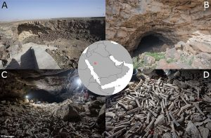 Sırtlanların Binlerce Yıldır Öldürdüklerini Sakladıkları Devasa Kemik Yığınıyla Dolu Bir Mağara Bulundu