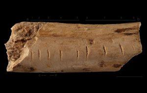 Neandertaller ve Diğer