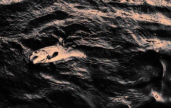 Okyanus Oksijen