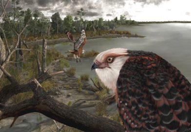 Paleontologists Find 25-Million-Year-Old Eagle-Like Bird Fossil in Australia