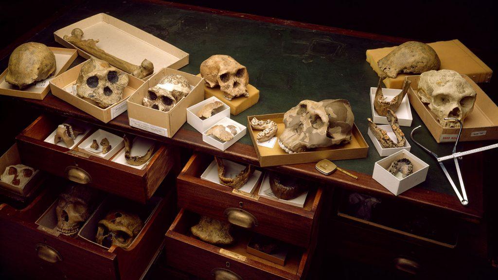 Fosiller ve Antik DNA, İnsanın Kökeninin Canlı Bir Resmini Çiziyor