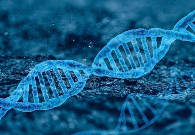"""So-Called """"Junk"""" DNA Is Essential, Plays a Key Role in Speciation"""