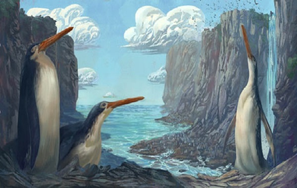 New Giant Penguin Species Unearthed in New Zealand