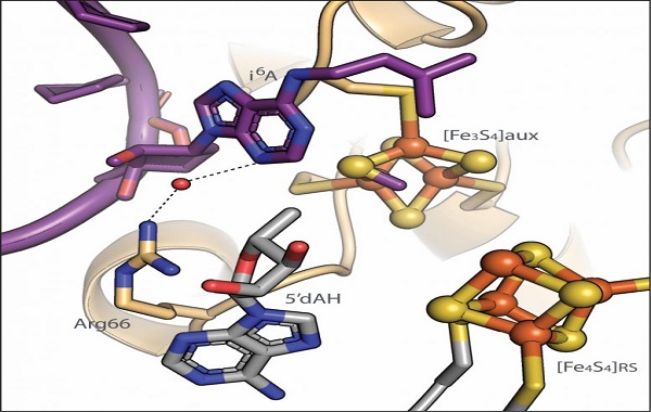How To Modify RNA: Crucial Steps for Adding Chemical Tag To Transfer RNA Discovered