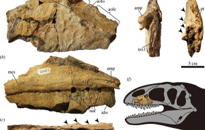 Özbekistanda Otobüs Büyüklüğünde Bilinmeyen Yırtıcı Bir Dinozorun Kalıntıları Bulundu