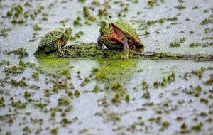 Mass Extinction Events Can Turn Freshwater Into Toxic Soup, And It's Already Happening