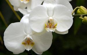 Orkidenin Erkeklerde En Yaygın Kanser Türüyle Savaşabildiği Keşfedildi