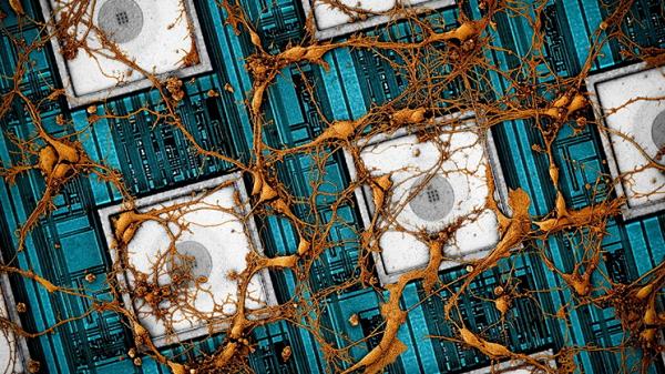 Samsung Tersine Mühendislikle Beyni Bir Çipe 'Kopyalayıp Yapıştırmak' İstiyor