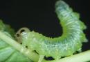 Birazdan Dinleyeceğiniz Ses Bilim Kurgu Film Müziğine Değil Sinek Larvalarına Ait