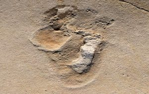 Oldest Footprints of Pre-Humans Identified in Crete – Six Million Years Old